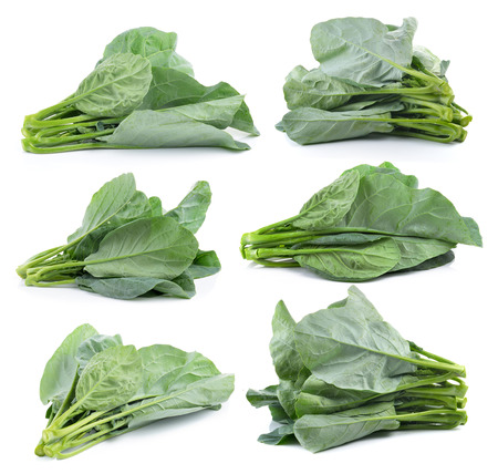 chinese broccoli on a white background photo