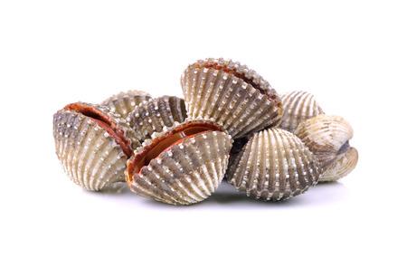 新鮮なハマグリ貝食品 写真素材