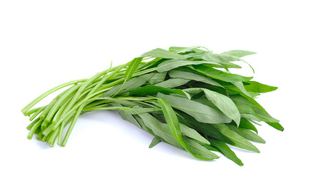 Fresh Water spinach isolated on white background Stok Fotoğraf
