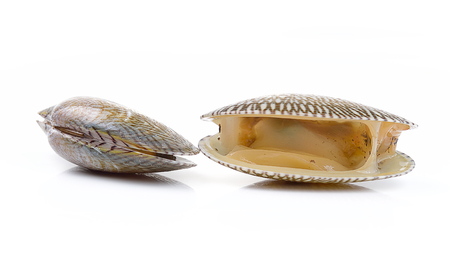 white necked: Fresh raw Surf clam on a white background