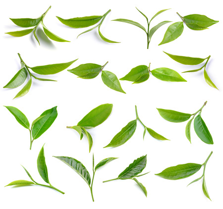 herb tea: green tea leaf isolated on white background