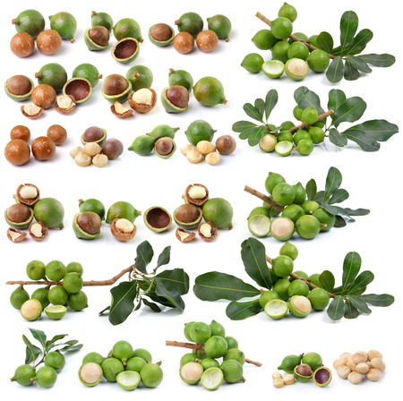 nueces de macadamia frescas sobre fondo blanco