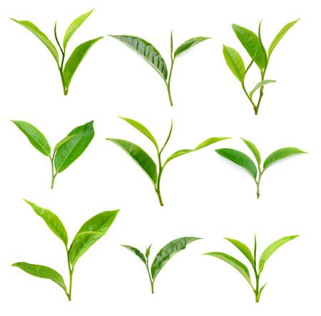 hoja de té verde sobre fondo blanco