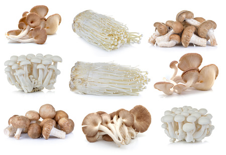 えのき茸、椎茸、白ふなキノコ、エリンギの白い背景の上