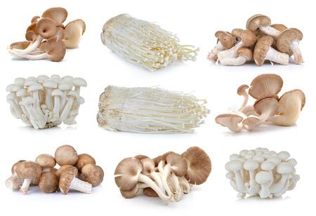 Shiitake, Enoki champignons, witte beuk champignons, oesterzwammen op de witte achtergrond Stockfoto