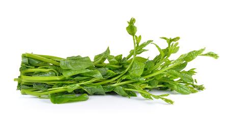 ceylon: Malabar spinach or Ceylon spinach isolated on white background