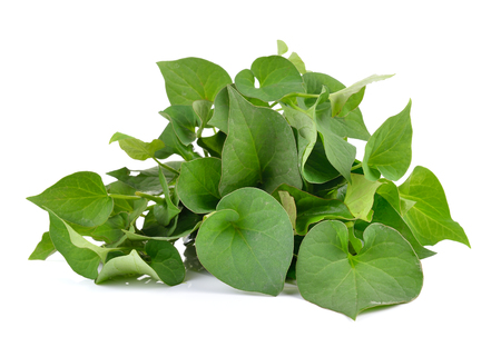 Herbal fish mint leaves isolated on white background Archivio Fotografico
