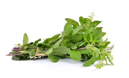 tulsi: Holy basil or tulsi leaves isolated on white background
