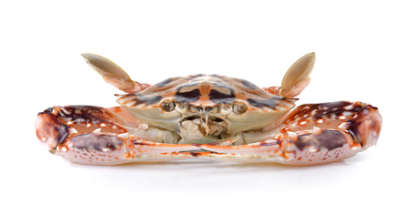 ted: serra ted mud crab on white background