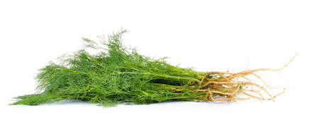 dill: dill on white background