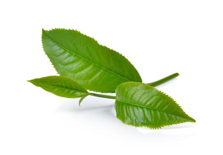 Groene thee blad geïsoleerd op een witte achtergrond Stockfoto - 45474830