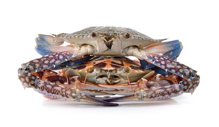 serrated: crab on white background Stock Photo