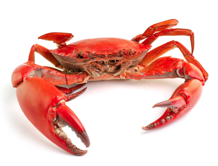 decapod: sea crab isolated on white background