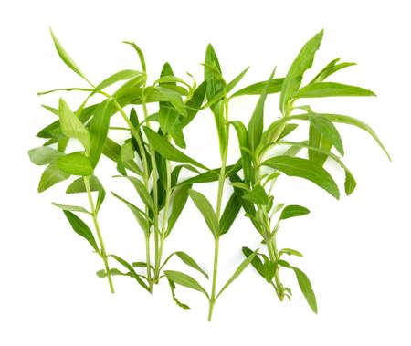 tarragon: Tarragon herbs on white background Stock Photo