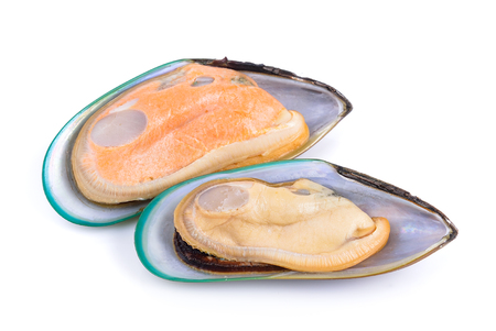 mussel: mussel on white background Stock Photo