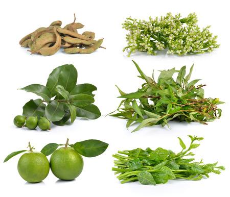 sweet orange: Vietnamese mint, Malabar spinach, sweet orange, macadamia, tamarind, Ceylon Spinach on white background Stock Photo