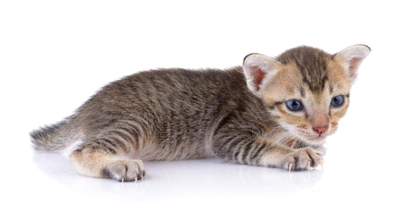 backgrounds: kittens on white backgrounds