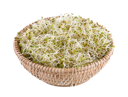 sprouted: Sprouted alfalfa seeds in basket on a white background
