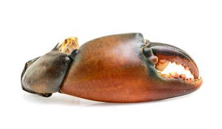 prepared shellfish: crab claw isolated on white background