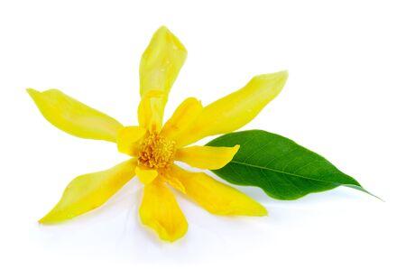 champa flower: Champaka