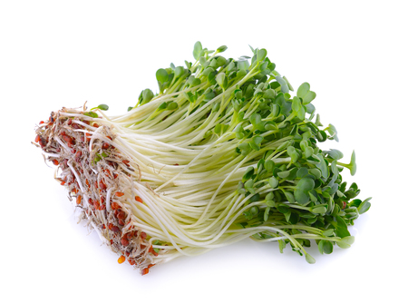 berros: kaiware sprout, japanese vegetable or watercress on white background Foto de archivo