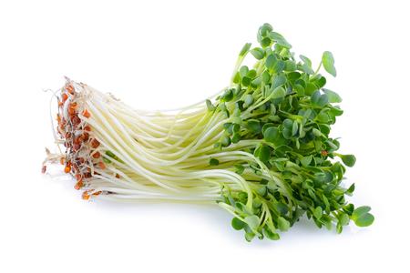 berros: brote kaiware, vegetal japonés o el berro en el fondo blanco