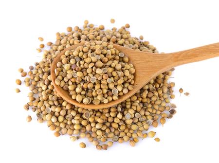 culantro: semilla de cilantro sobre fondo blanco