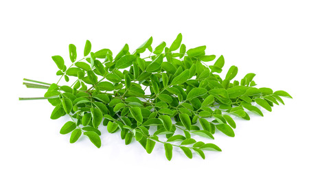 the drumstick tree: Moringa leaves on white background