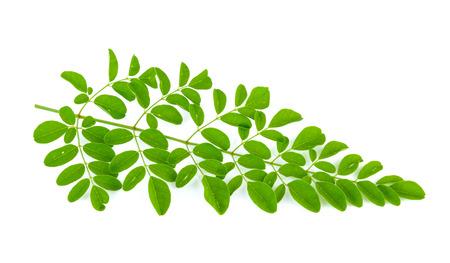 drumstick tree: Moringa leaves on white background