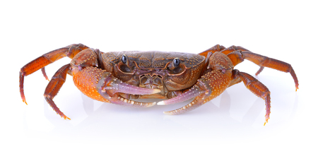 crab on white background Stock Photo