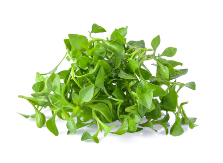 water cress isolated on white background