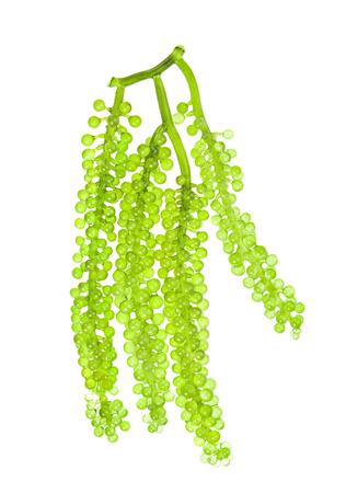 Sea grapes ( green caviar ) seaweed on white background Zdjęcie Seryjne