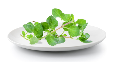 oregano herb in plate isolated on a white background