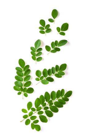 Moringa leaves have medicinal properties. top view Stock Photo - 104842240