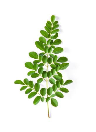 Moringa leaves have medicinal properties. top view Stock Photo - 107245459