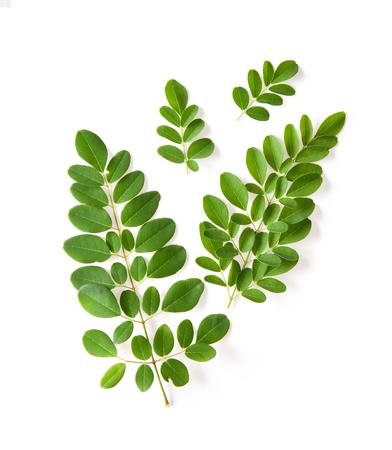 Moringa leaves have medicinal properties. top view Stock Photo - 107245468
