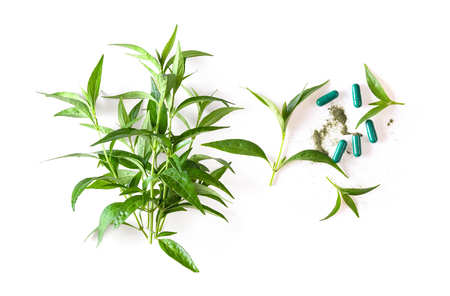 fresh kariyat herb plant and capsule on white background. top view