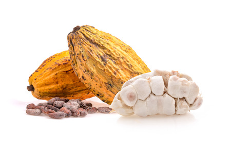 cocoa fruits isolated on white background
