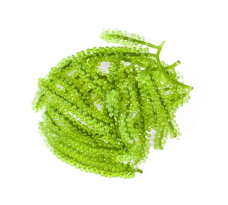Sea grapes ( green caviar ) seaweed on white background Stock Photo