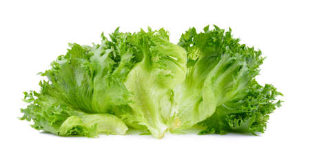 fresh lettuce leaves on white background Banque d'images