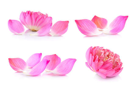 set of Lotus petals on white background