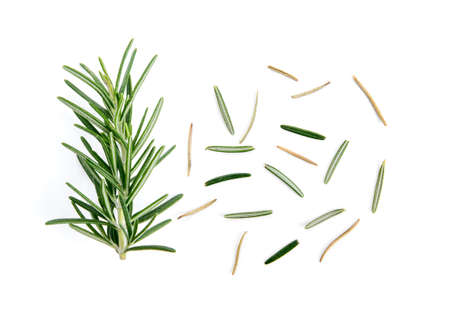 fresh rosemary isolated on white background Banque d'images
