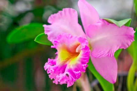 nifty: Pink orchid on green background