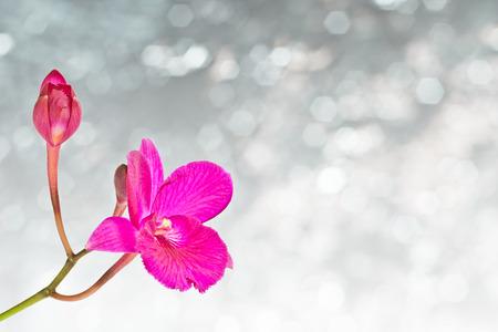 cattleya: Red cattleya orchid