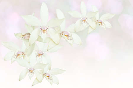 fragility: White orchid isolated on white