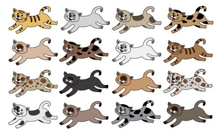 siamese: Siamkatzen
