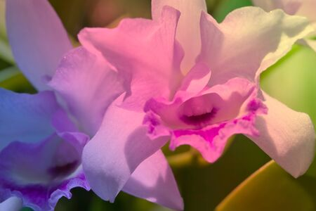 nobleness: Purple orchid in natural background
