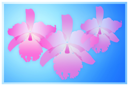 Pink cattleya orchid on blue background