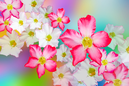 Group of flowers on colorful background