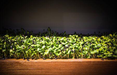 Le début de la vie comme la germination des graines doit faire face à des obstacles, des problèmes, des difficultés, manger des vers et des insectes, les graines de tournesol germent, Arrière-plans